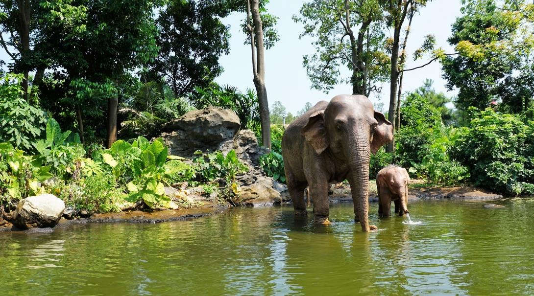 A mother elephant and her baby go for a soak in the river at a sanctuary